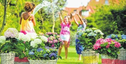 Sommer-Trends für den Garten
