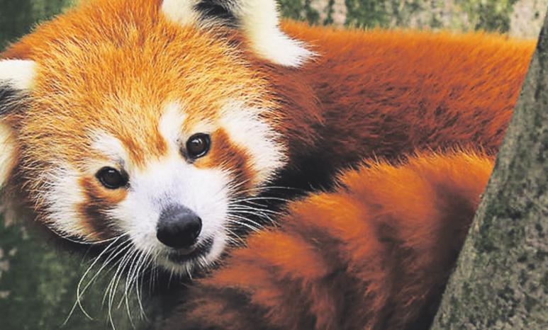Gerade im Herbst lohnt ein Besuch bei Panda und Co.