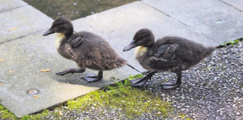 Zollstocker Tierheim bietet seit 150 Jahren Zuflucht