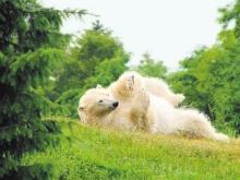 Reise-Trends 2018: Neues Polarium mit Eisbären im Rostocker Zoo