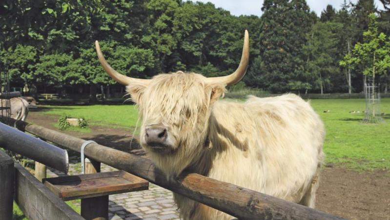 Esel, Rinder, Enten und mehr: Seit 110 Jahren gibt es in Köln-Lindenthal den Tierpark