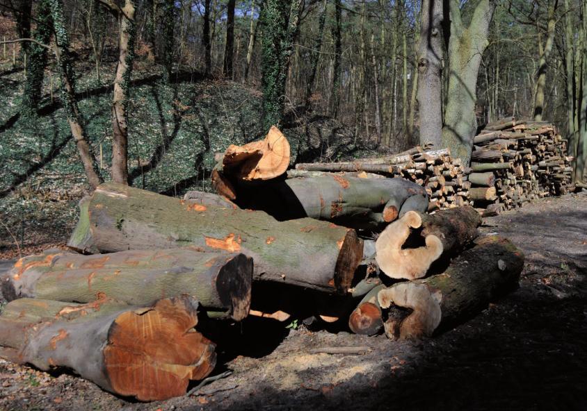 Gefällte Bäume gehören zum Straßenbild wie Verkehrsschilder. Einige Passanten nehmen den Baumtod kaum zur Kennntnis. Anderen kommen die Tränen.