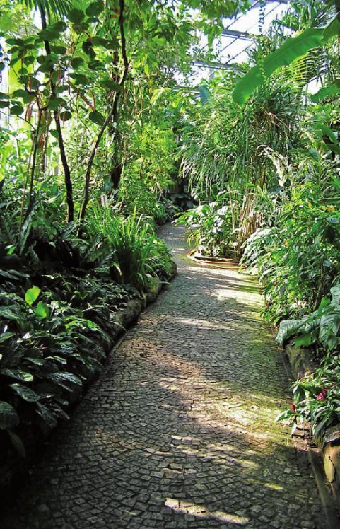 Das Tropenhaus im alten botanischen Garten am Dammtor