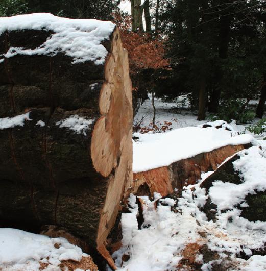 Baumfrevel oder Pilzbefall? Für Außenstehende ist die Antwort oft schwierig.
