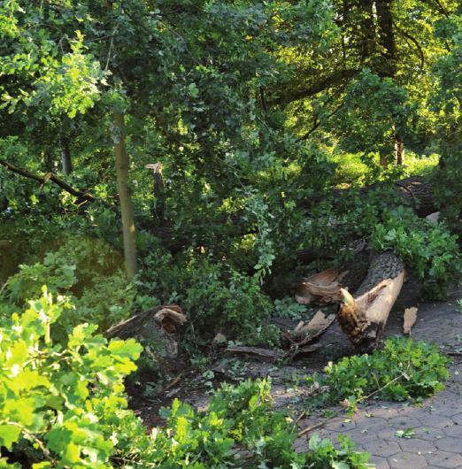 Ein kranker Baum verliert einen Ast. Und er gefährdet Passanten wie Autofahrer