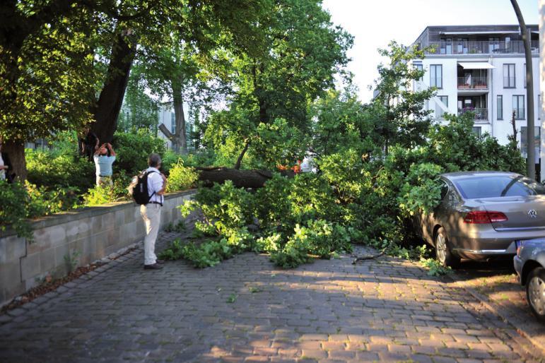 Ein umstürzender Baum kann zur Lebensgefahr werden. Hier an der Elbschlossstraße, am Rand der Elbschlossresidenz