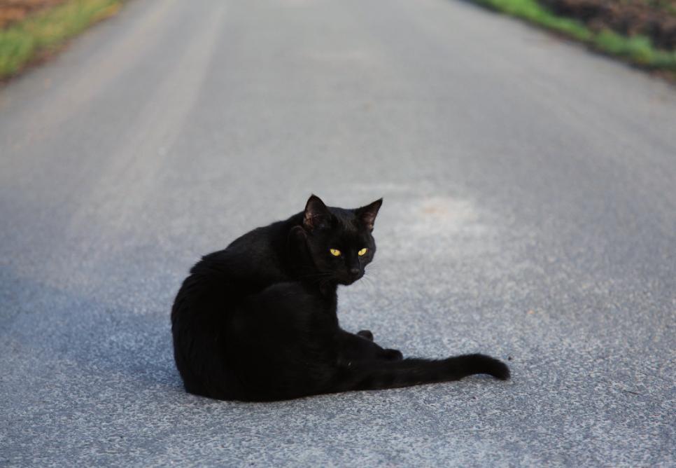 """Wenn am Freitag, den 13. auch noch die schwarze Katze auftaucht, dann man """"Gute Nacht""""! FOTO: LE 3EME OEIL - FOTOLIA.COM"""