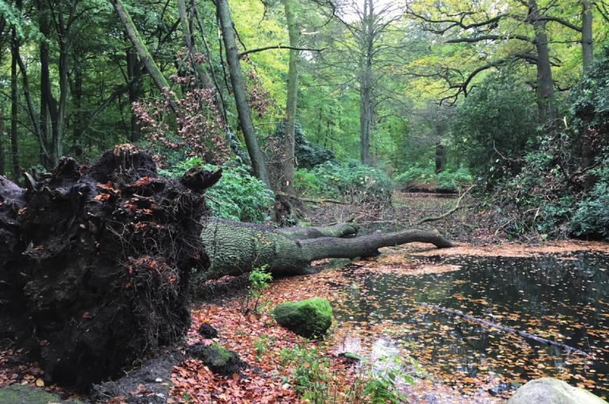 """Hirschpark, Sturm """"Herwart"""" warf nicht nur junges Gemüse um. Auch jahrzehntealte Bäume gehörten zu den Opfern"""