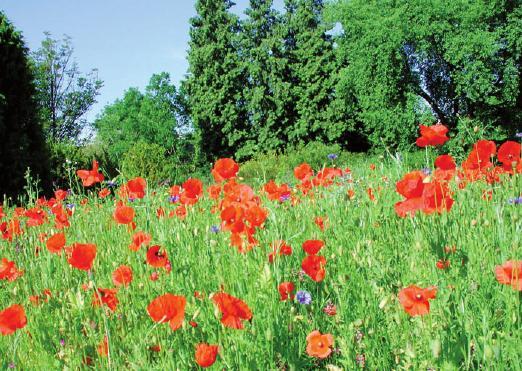 Blütenpracht in der Mittelmeerabteilung