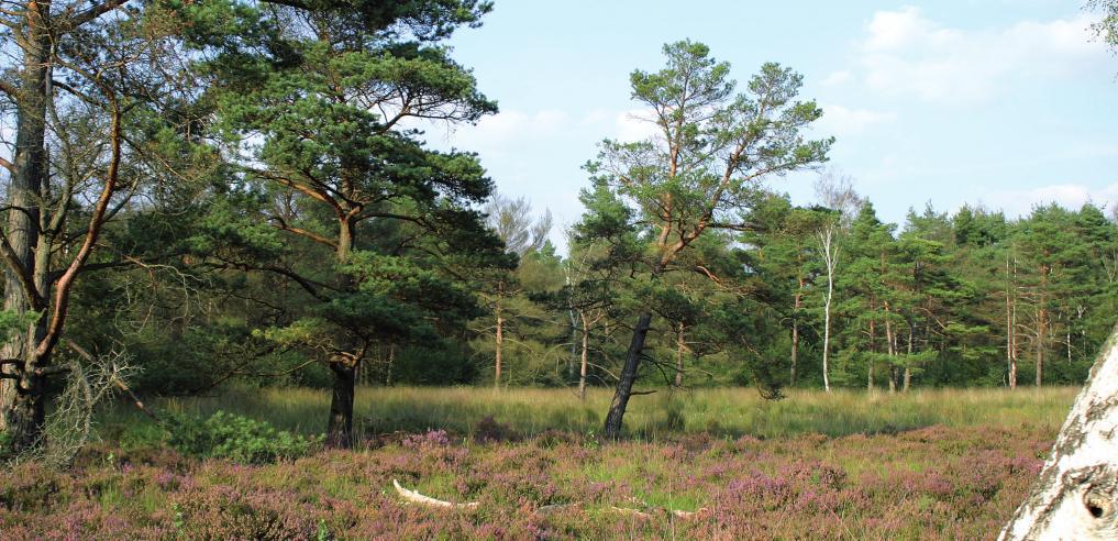 Wer im Forst Klövensteen spazieren geht, kann einige nützliche Pflanzen am Wegesrand erspähenFOTO: ENGELSCHALL