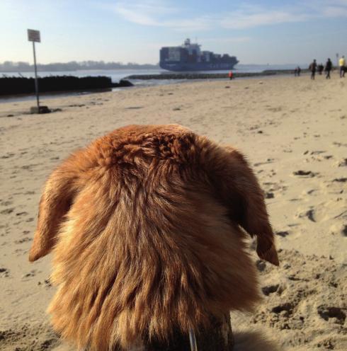 Besonders im Hamburger Westen sind Hunde als Haustiere sehr beliebt. Die zahlreichen Parkanlagen sowie der Elbstrand laden zu einem ausgiebigen Spaziergang an der frischen Luft ein. Hunde sorgen damit gleichzeitig für genügend Bewegung des Besitzers. Sportliche Aktivität wie Toben am Strand und Ballwerfen hält alle Beteiligten fit und bei guter Laune. FOTO: BLETTENBERG772_FOTOLIA.COM