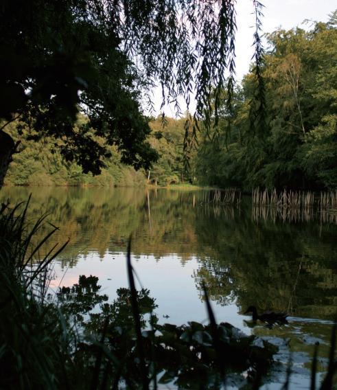 Für Romantiker: Rissener Fischteiche im Klövensteen