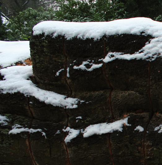 Die Kettensägen werden auch im Winter angeworfen.