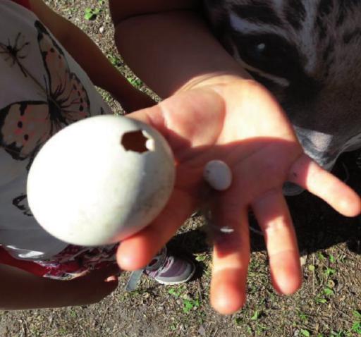 Eiergrößen waren Hingucker